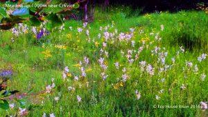 flowersgrass